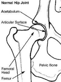 Hip dysplasia natural suplements