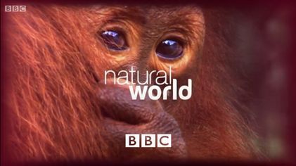 Natural World (TV series) - Wikipedia