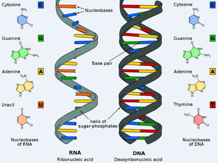 Nucleic acids – DNA and RNA | Recombinant DNA