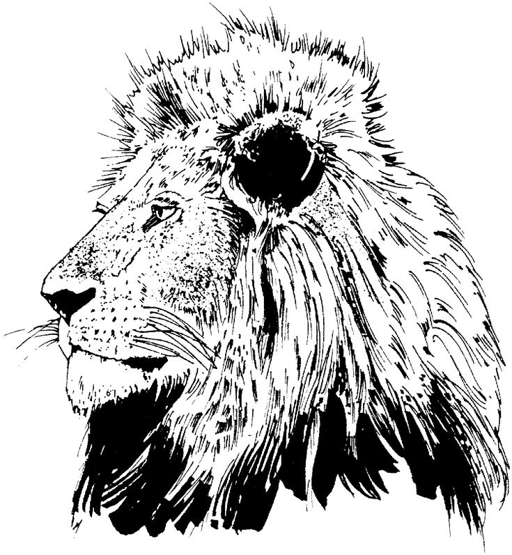 11 best sunday school images on pinterest bible for Realistic lion coloring pages