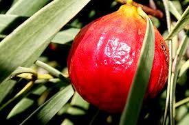 Quandong Recipes - Quandong ~ Australia's Native Peach !