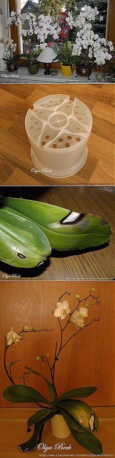 Орхидеи Phalaenopsis . Ошибки и опыт по уходу..