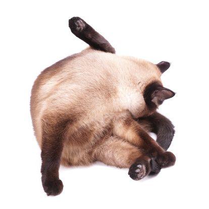 kitty getty