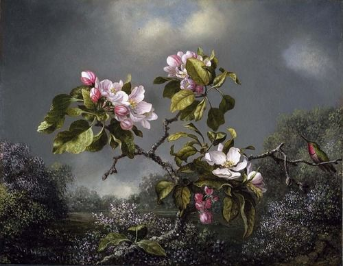 Martin Johnson Heade, flores de Apple y Colibrí, 1871 (fuente).