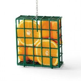 Make a cheap fruit feeder by using a suet feeder.  Oranges will attract orioles.  And they'll be grateful for the treat.  :)