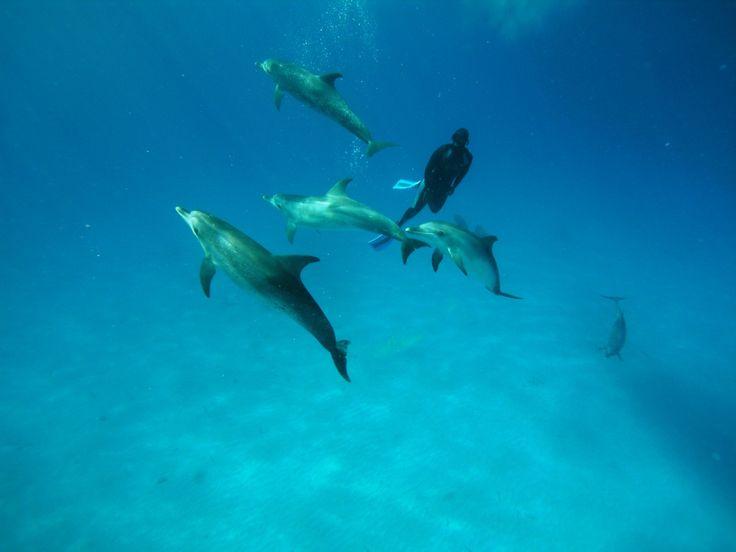 Mungkin menyelam untuk melihat keindahan alam bawah laut sudah terlihat biasa, tapi bagaimana dengan menyelam bersama sekawanan lumba-lumba? Sensasinya pasti sangat berbeda. Kamu bisa menjajal kegiatan ekstrim ini jika berkunjung ke Tanzania lebih tepatnya di Pulau Zanzibar. Lumba-lumba disebut sebagai hewan paling pintar bahkan mengalahkan simpanse, menurut laman wikipedia pernyataan ini disebabkan karena lumba-lumba merupakan …