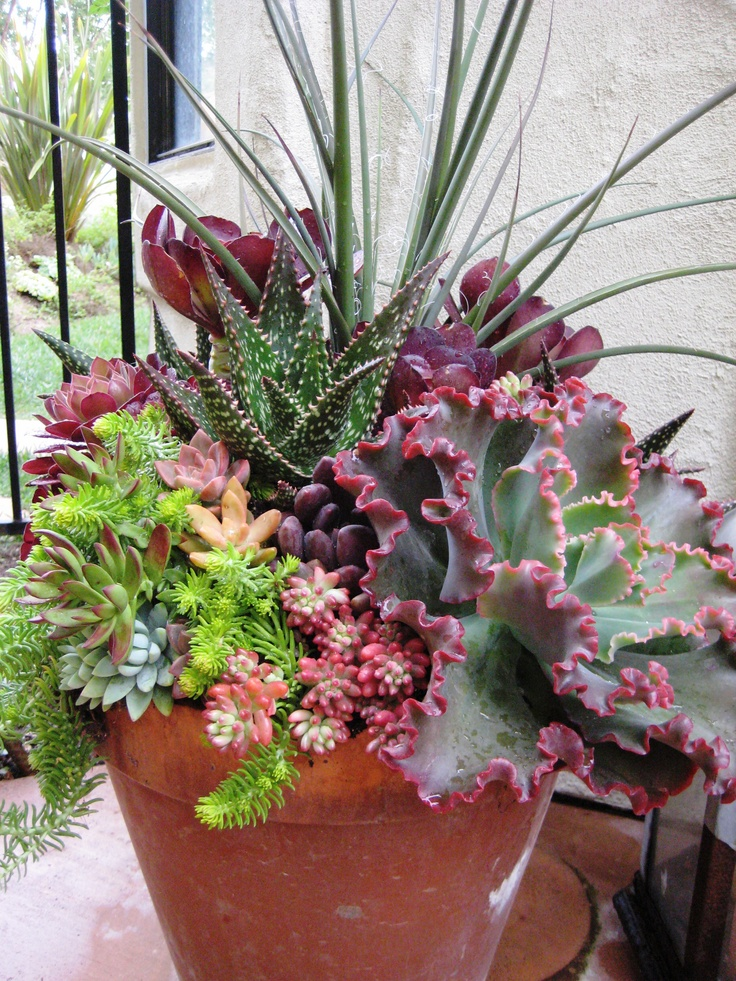 17 best images about landscape ideas on pinterest backyards lawn care and perennials - How to make a succulent container garden ...