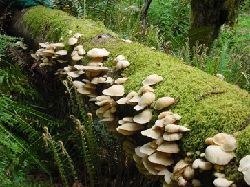 Indoor Mushroom Garden 8 best mushrooms images on pinterest fungi growing mushrooms and growing oyster mushrooms workwithnaturefo