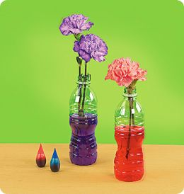 Great activity to show kids how flowers drink water. #May Themes #Savvy Science