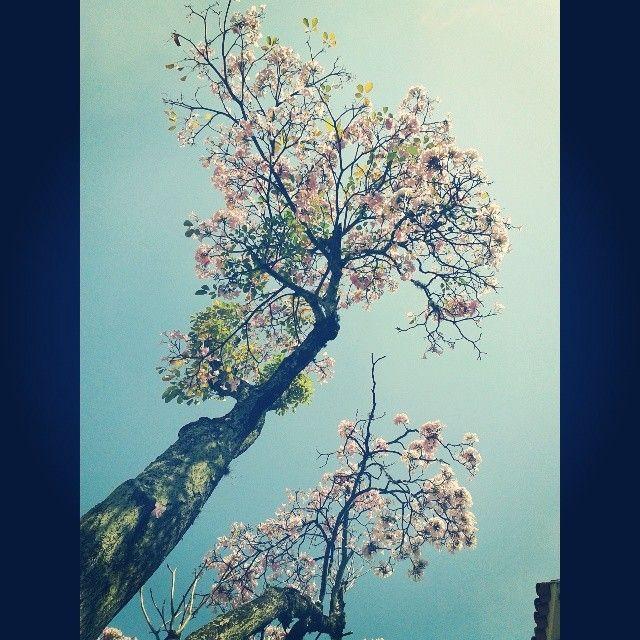 En esta ciudad se florece cada día. #Calico #Cali #ElZarzoRevista