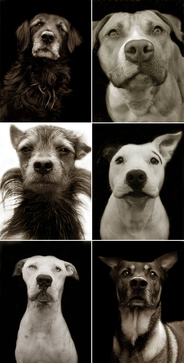 Shelter dogs book of photography by Traer Scott. Get it at the ASPCA website - proceeds go to the ASPCA!