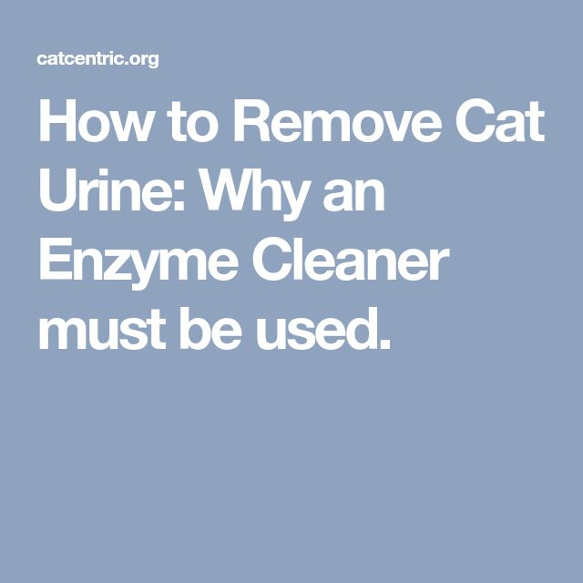 How to Remove Cat Urine: Why an Enzyme Cleaner must be used.