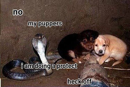 a protect