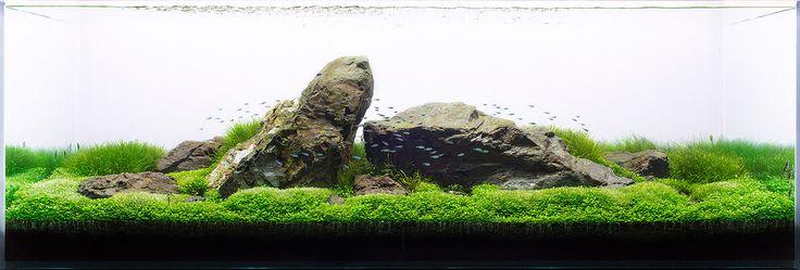 Aquarium Design Group