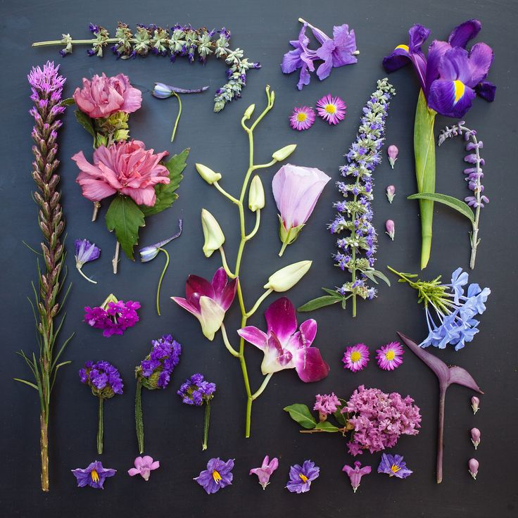 From Emily Blincoe's 'The Garden Collection', colors organized neatly: PURPLE. http://emilyblincoe.tumblr.com/