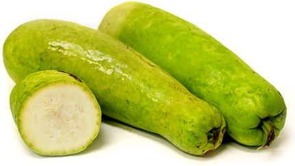 Opo Squash Information and Facts