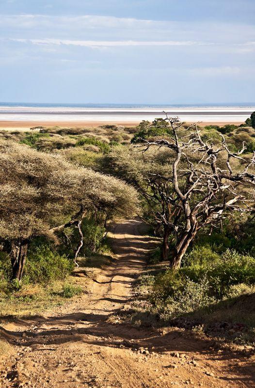 Road to Lake Manyara - Lake Manyara, Arusha Tanzania by Michael Levy