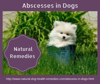 How to treat abscesses in dogs naturally.