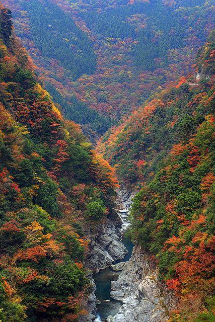 Autumn colours in Iya Valley, Tokushima