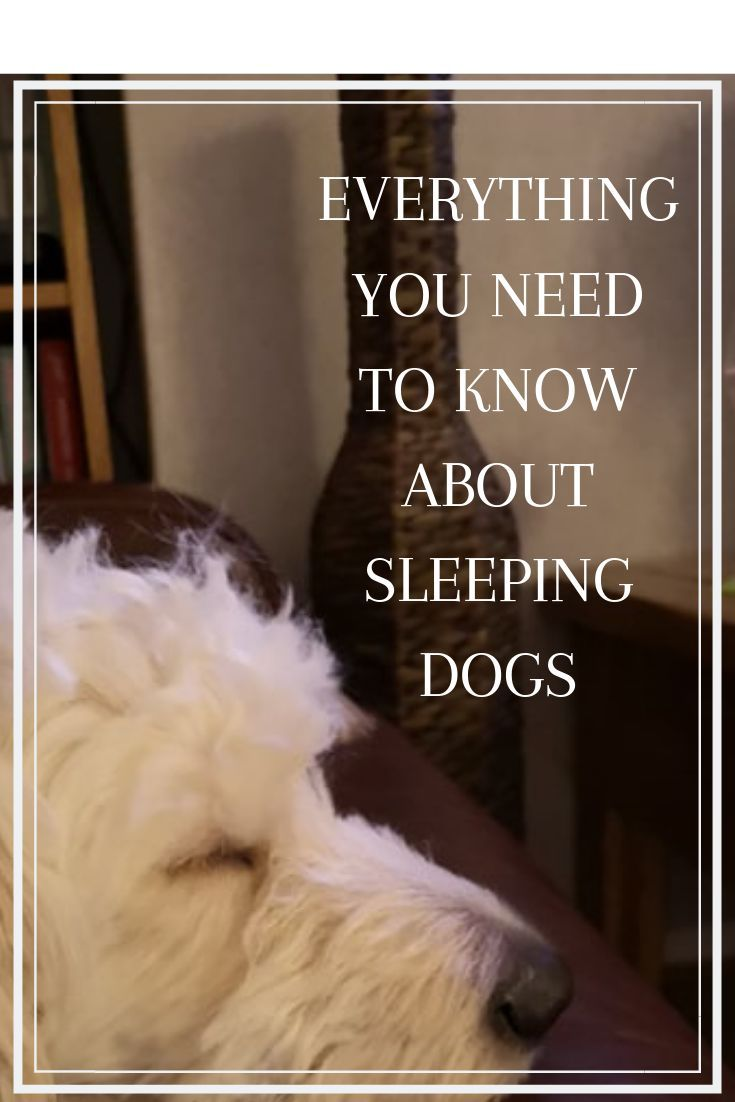 All About Sleeping Dogs Sleep Positions And Dreaming Dog