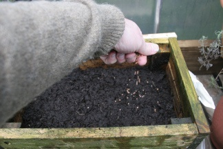 Who knew that you could plant onion seeds now!!!  You do have to keep the box warm after planting but in April you should have onion plants that you can transplant to the garden!!!