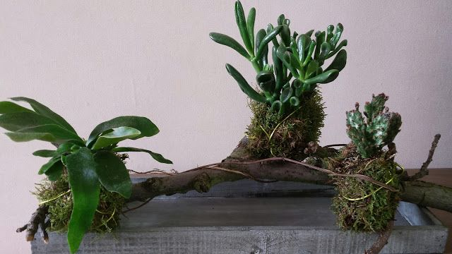 Van Stekkie tot Plant: DIY - plantjes op stok