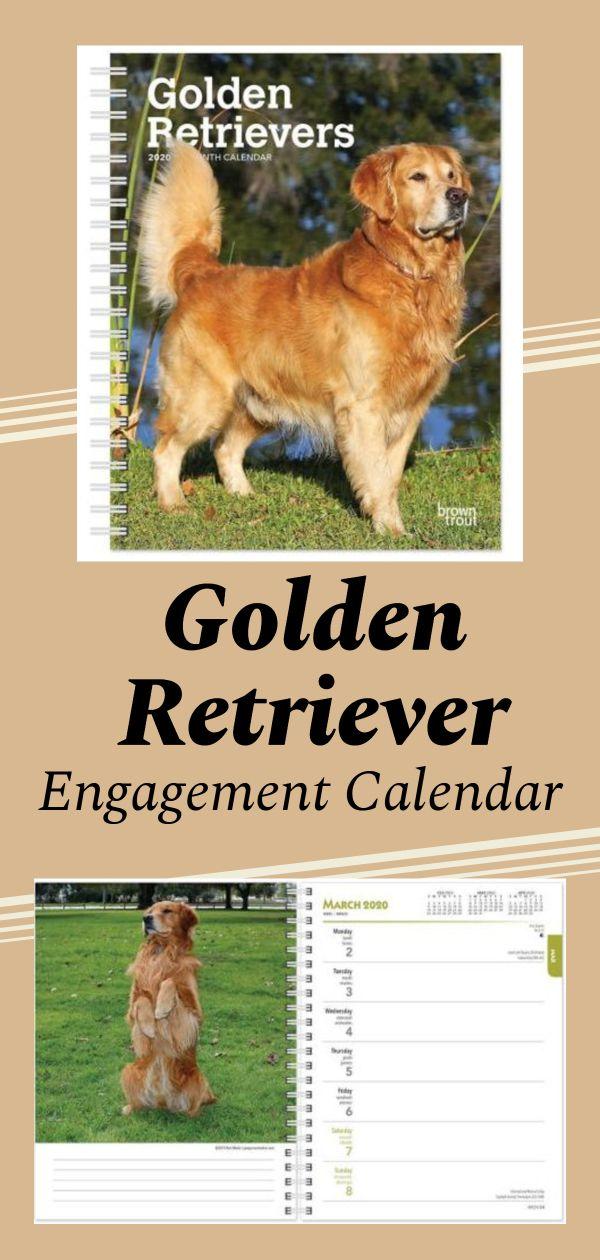 Pin On Golden Retrievers