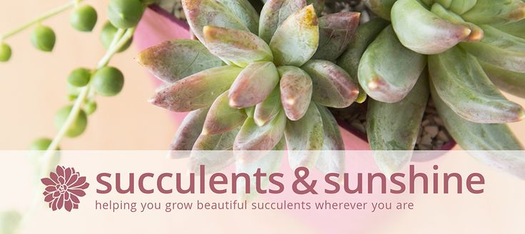 Succulents and Sunshine! This is a brilliant blog for helping you grow succulents. I already want to try a bunch of these craft ideas.