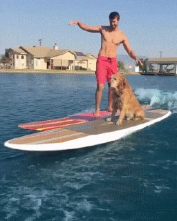 Surfing with Dog