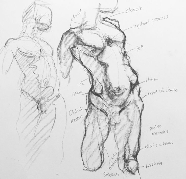 Funky Sarah Simblet Anatomy For The Artist Composition - Image of ...
