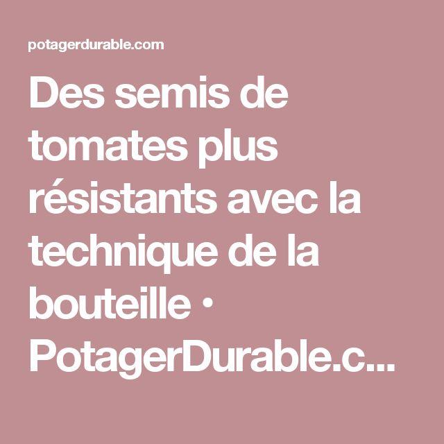 Des semis de tomates plus résistants avec la technique de la bouteille • PotagerDurable.com