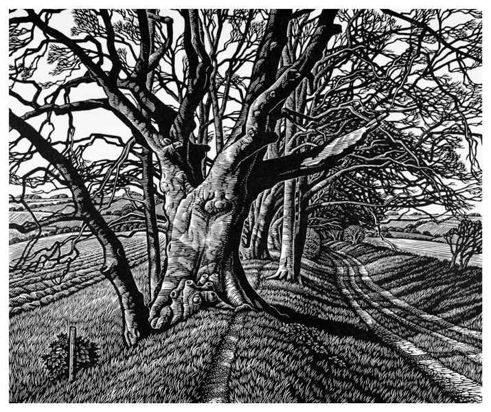 Howard Phipps: Beech Tree Cloister l