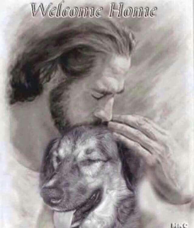 Dog Angel Quotes: My Beloved Pets, Sugar, Dakota & Canuck