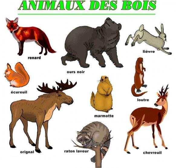 les animaux des bois