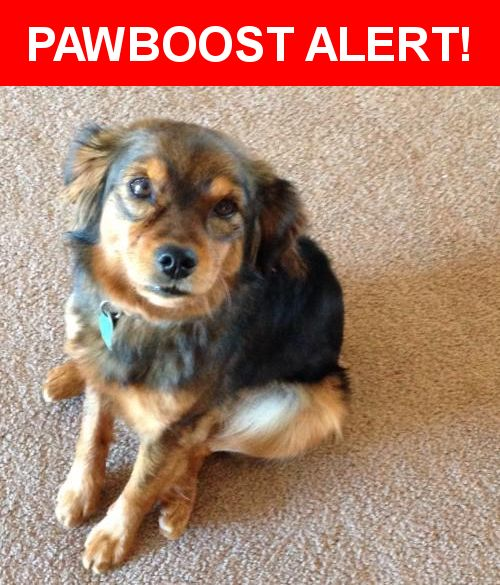 Please spread the word! Brownie was last seen in Snowflake, AZ 85937.    Nearest Address: Near Snowflake Blvd & Willis Ranch Ln