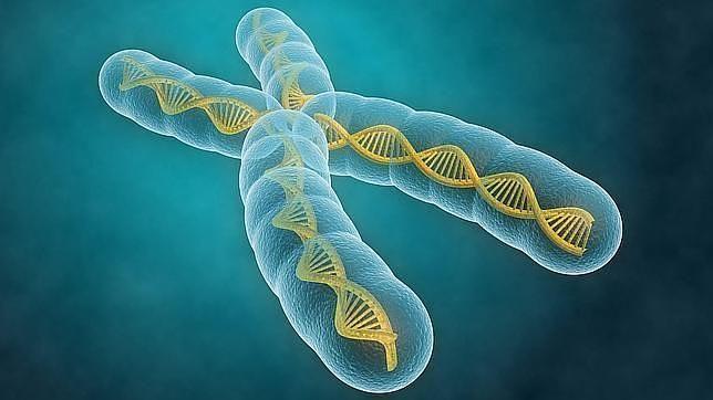 El ADN borra su «disco duro» en cada generación