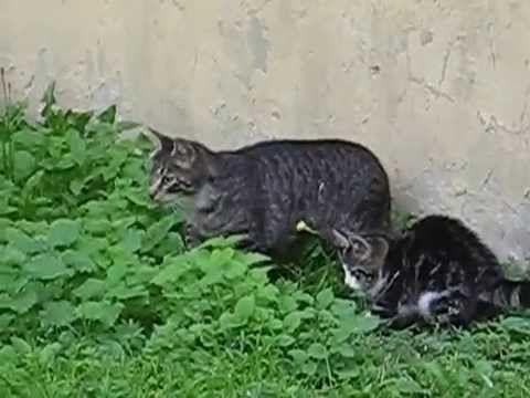 Cute animals - Lovely Kitten hunting - YouTube