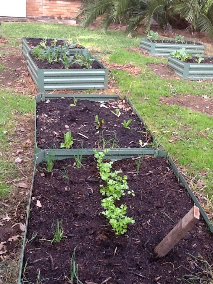 59. New term, new plantings ....