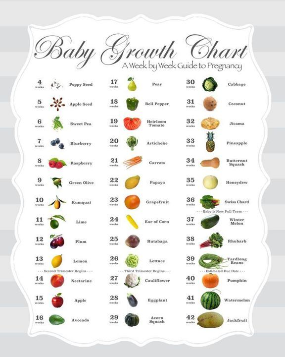 pregnancy belly growth chart