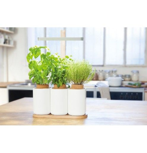 9 best Culteev - Basile, smart indoor garden images on Pinterest