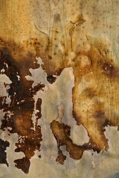 Burnt/blistered paint