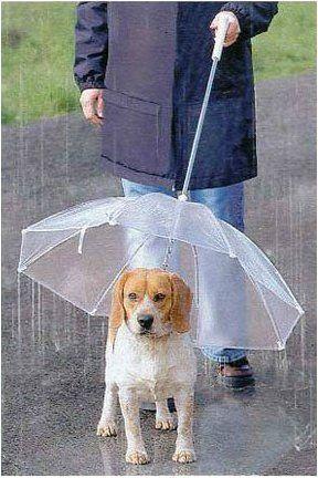 Hunde Regenschirm darumbinichblank.de