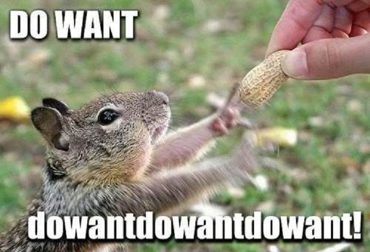funny squirrel reaching nut excited do want pics 10 Funny Pet Memes