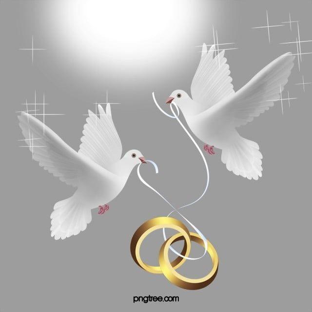 ناقلات خاتم الزواج عالية الدقة جميلة حمامة Png والمتجهات للتحميل مجانا In 2020 Wedding Ring Vector Wedding Ring Graphic Romantic Wedding Frame