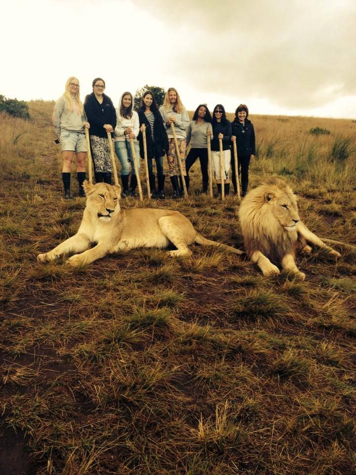 The Kings of the jungle #WalkingWithLions