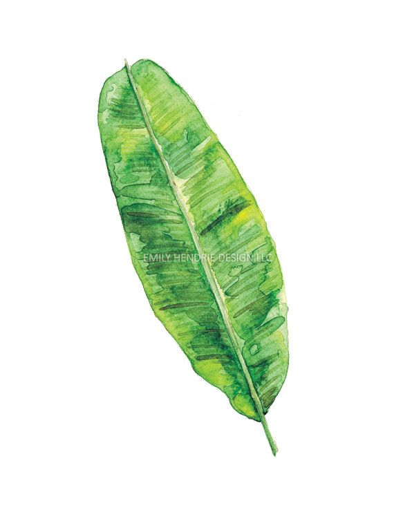Foglia di banana acquerello stampa / Tropical Leaf stampa / acquerello Tropical Leaf Galleria parete