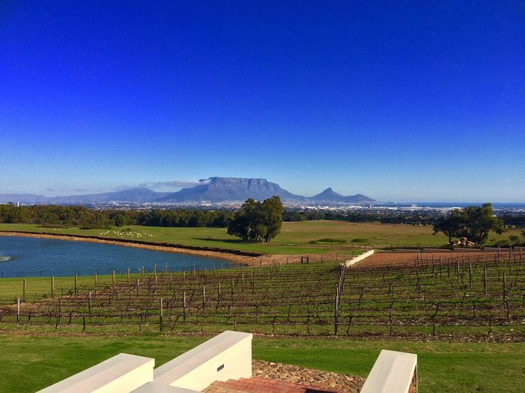 View of Table Mountain from De Grendel Wine Estate