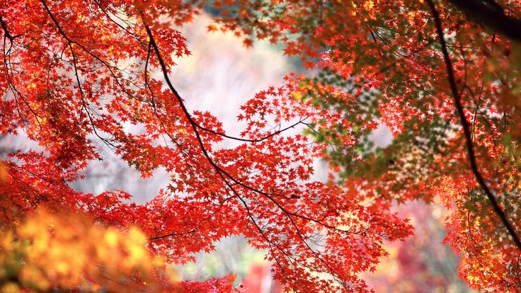 Autumn Nature Red Tree Leaf Forest HD Wallpaper