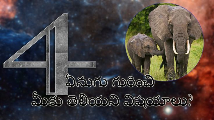 Elephant Unknown Facts in Telugu | TeluguFacts 4th Video