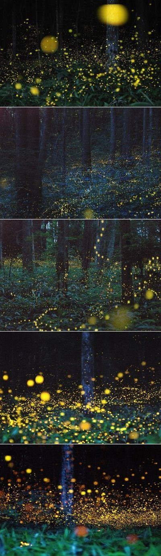 Vou caçar mais de um milhão de vagalumes por aí pra te ver sorrir [...]  Fireflies in the forrest